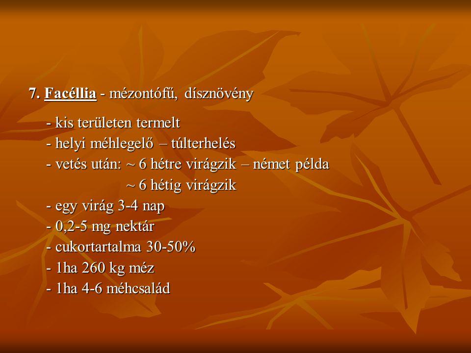 7. Facéllia - mézontófű, dísznövény