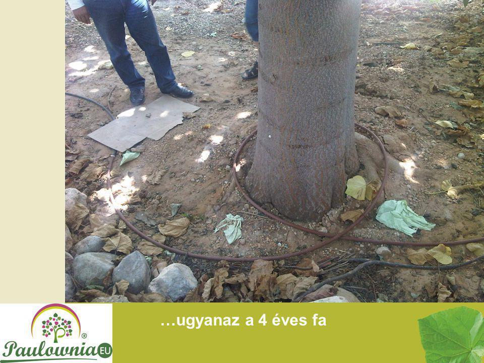 …ugyanaz a 4 éves fa
