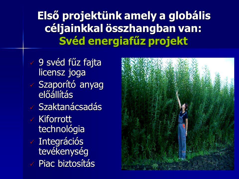 9 svéd fűz fajta licensz joga Szaporító anyag előállítás