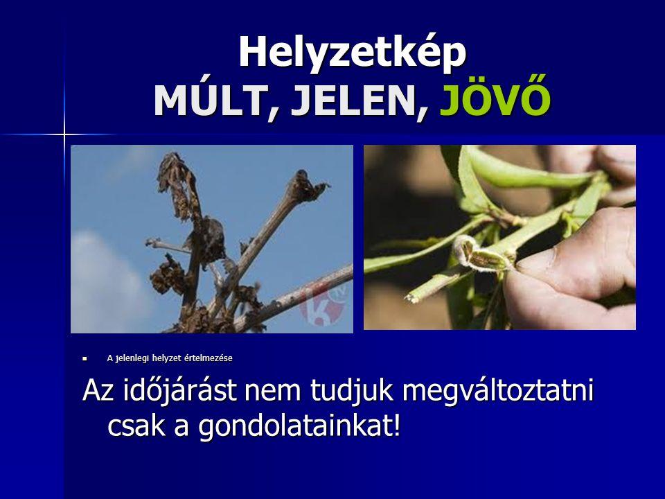 Helyzetkép MÚLT, JELEN, JÖVŐ