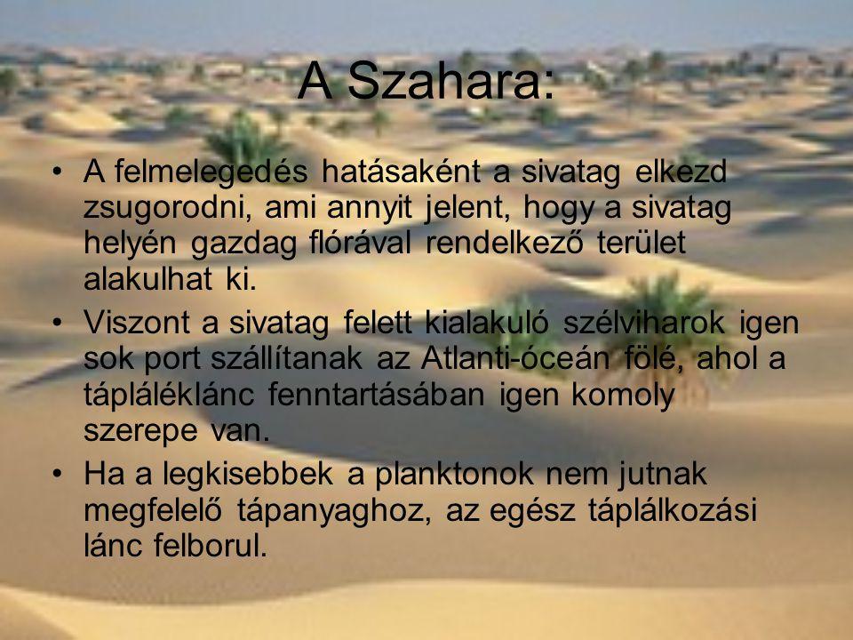 A Szahara:
