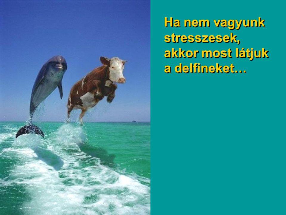 Ha nem vagyunk stresszesek, akkor most látjuk a delfineket…