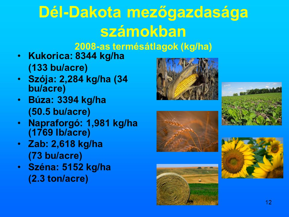 Dél-Dakota mezőgazdasága számokban 2008-as termésátlagok (kg/ha)