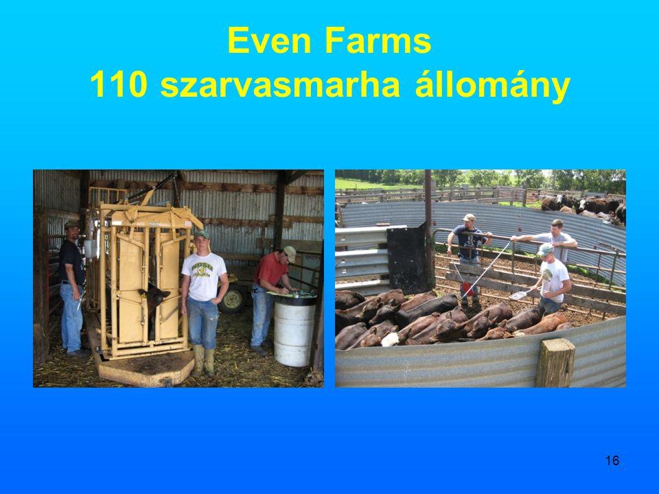 Even Farms 110 szarvasmarha állomány