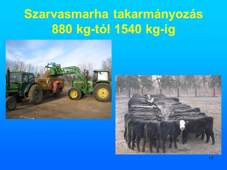 Szarvasmarha takarmányozás 880 kg-tól 1540 kg-ig