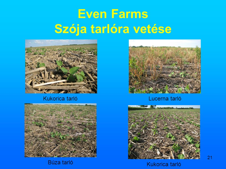 Even Farms Szója tarlóra vetése