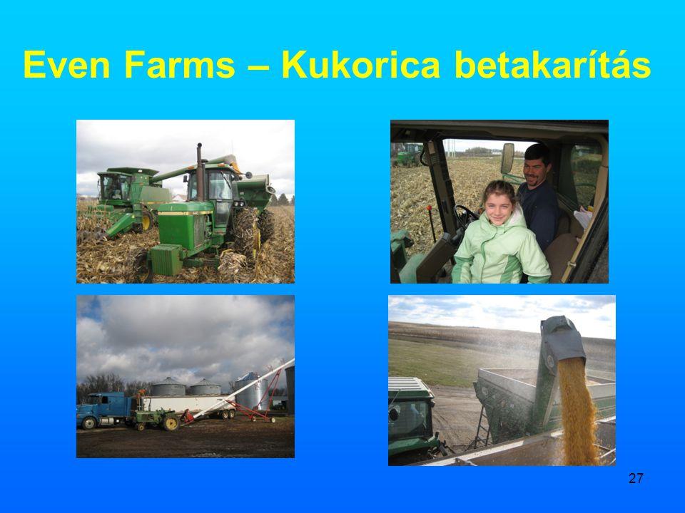 Even Farms – Kukorica betakarítás