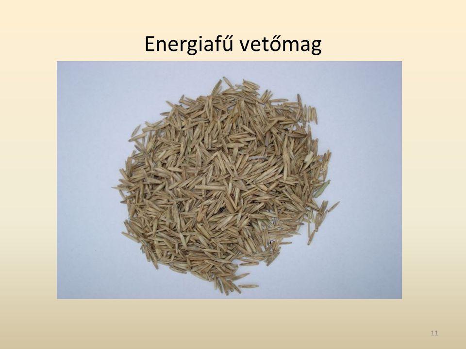Energiafű vetőmag