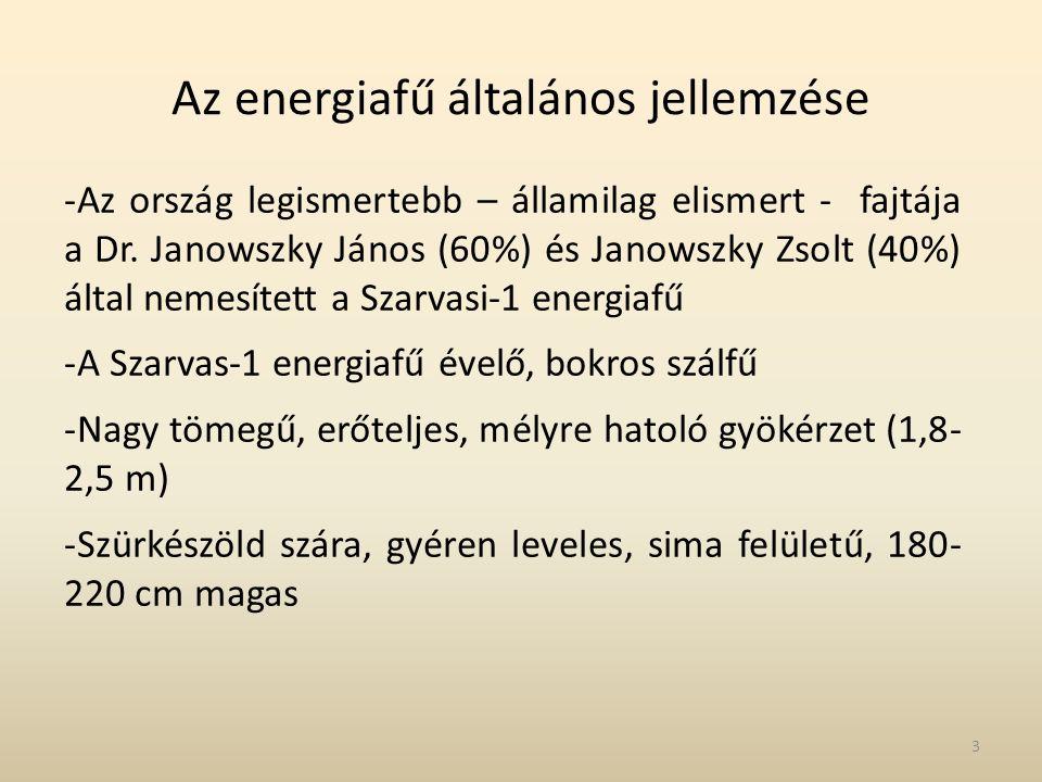 Az energiafű általános jellemzése