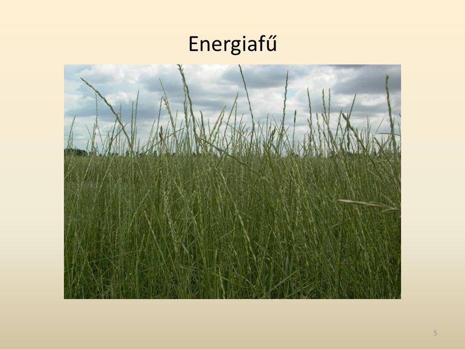 Energiafű