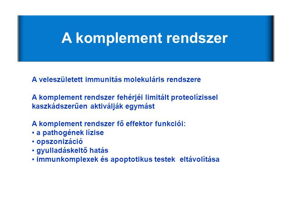 A komplement rendszer A veleszületett immunitás molekuláris rendszere