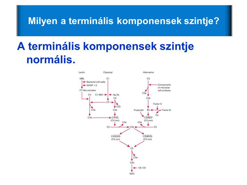 Milyen a terminális komponensek szintje