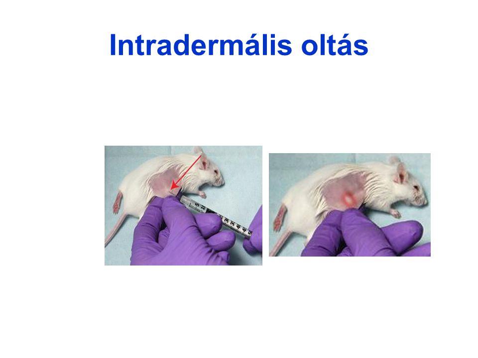 Intradermális oltás 32