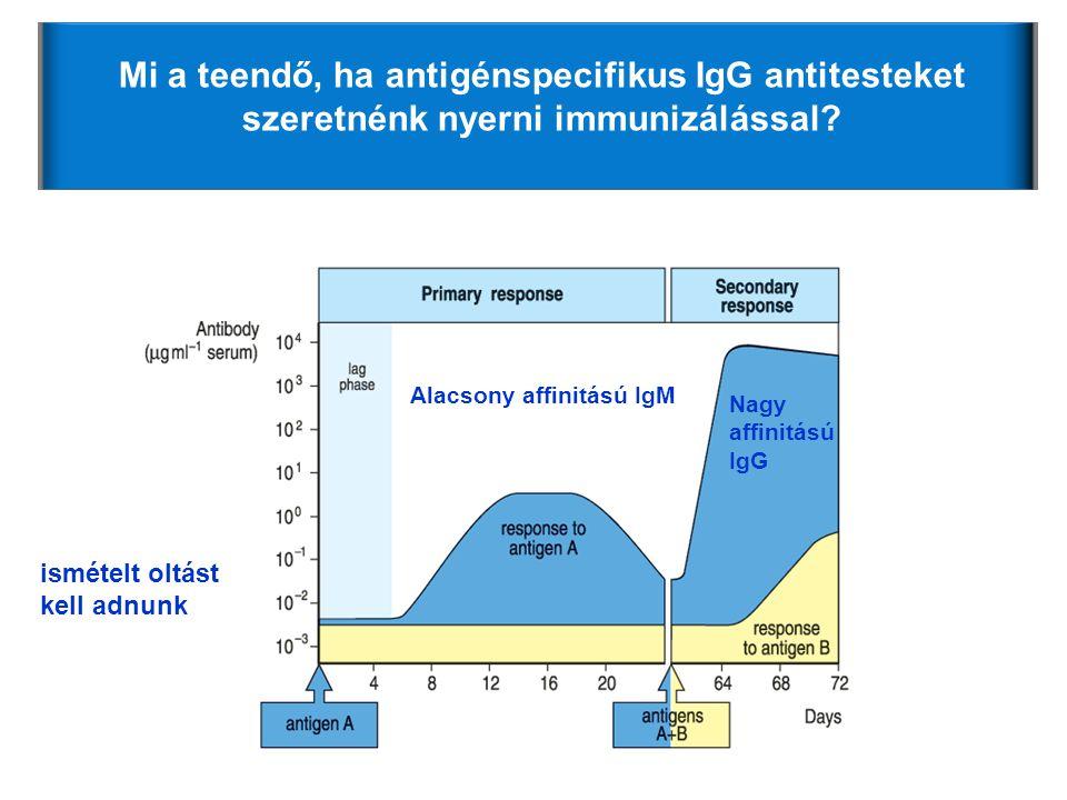 Mi a teendő, ha antigénspecifikus IgG antitesteket szeretnénk nyerni immunizálással