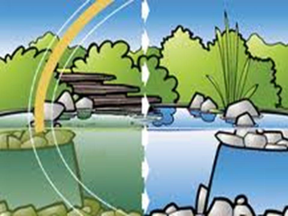 A szennyezett víz az életben: