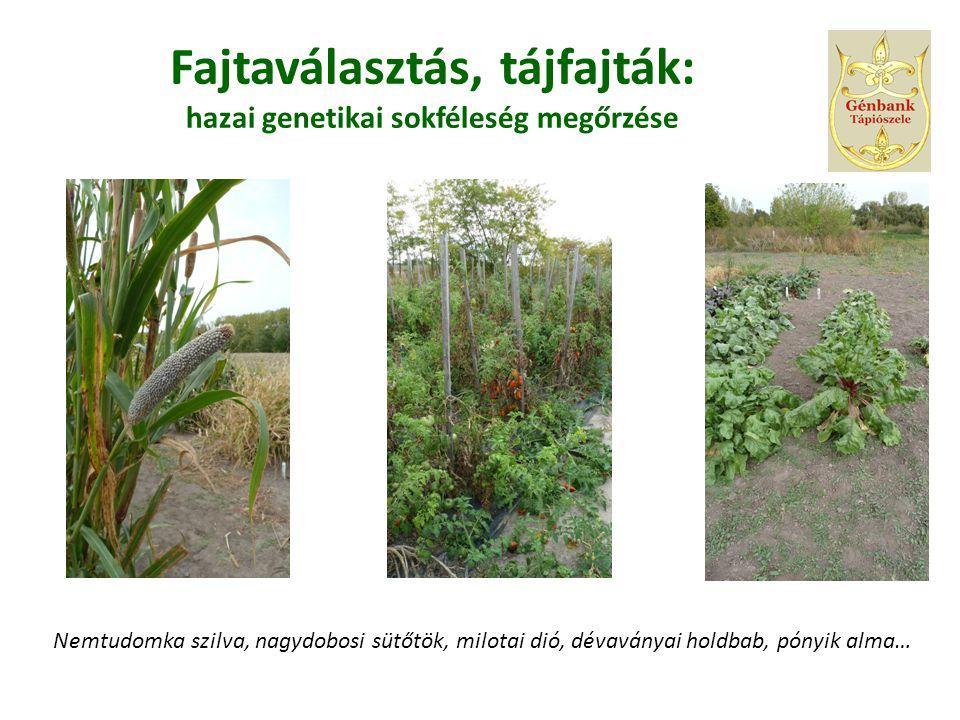 Fajtaválasztás, tájfajták: hazai genetikai sokféleség megőrzése