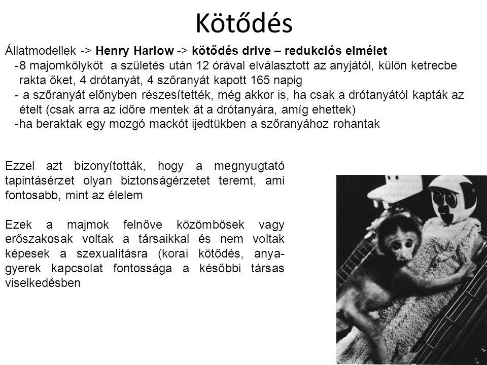 Kötődés Állatmodellek -> Henry Harlow -> kötődés drive – redukciós elmélet.