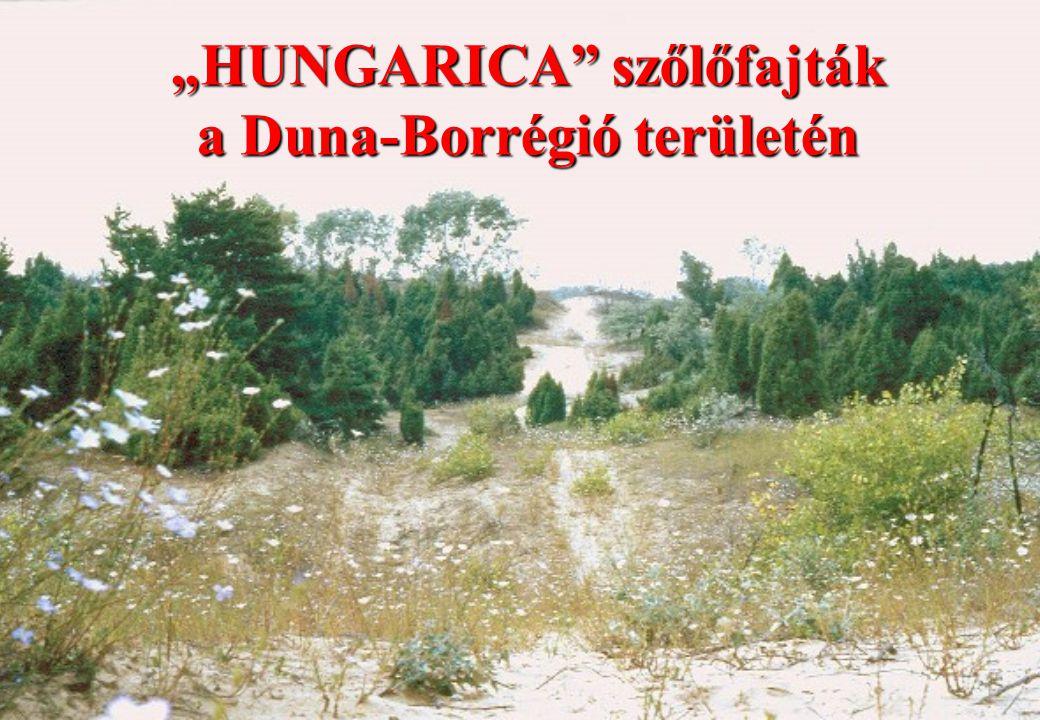 """""""HUNGARICA szőlőfajták a Duna-Borrégió területén"""