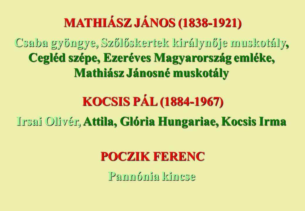 Irsai Olivér, Attila, Glória Hungariae, Kocsis Irma