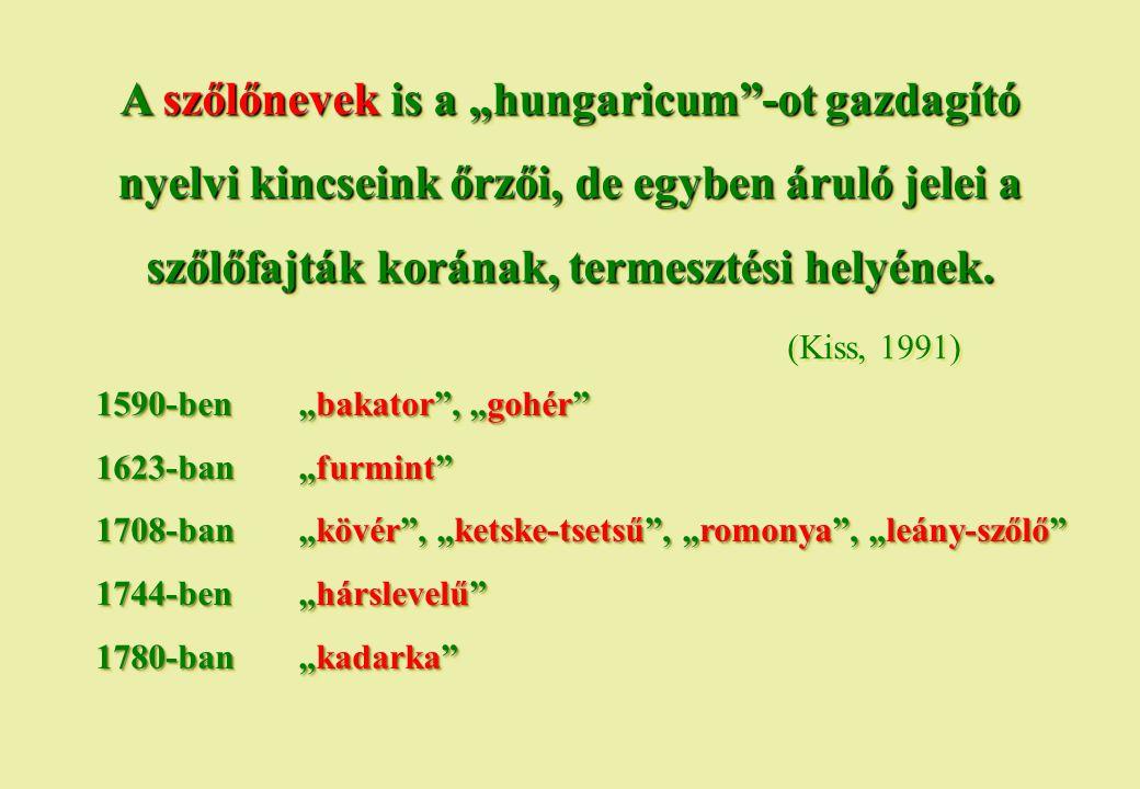 """A szőlőnevek is a """"hungaricum -ot gazdagító nyelvi kincseink őrzői, de egyben áruló jelei a szőlőfajták korának, termesztési helyének. (Kiss, 1991)"""