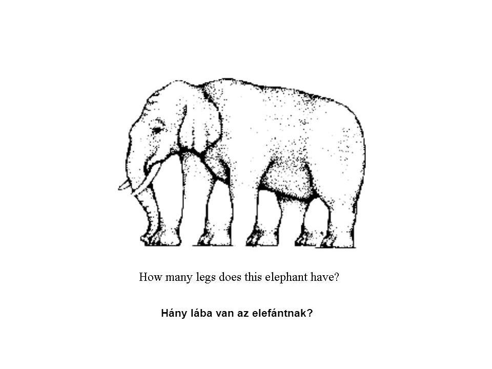 Hány lába van az elefántnak
