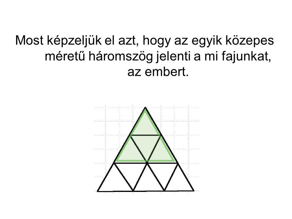 Most képzeljük el azt, hogy az egyik közepes méretű háromszög jelenti a mi fajunkat, az embert.