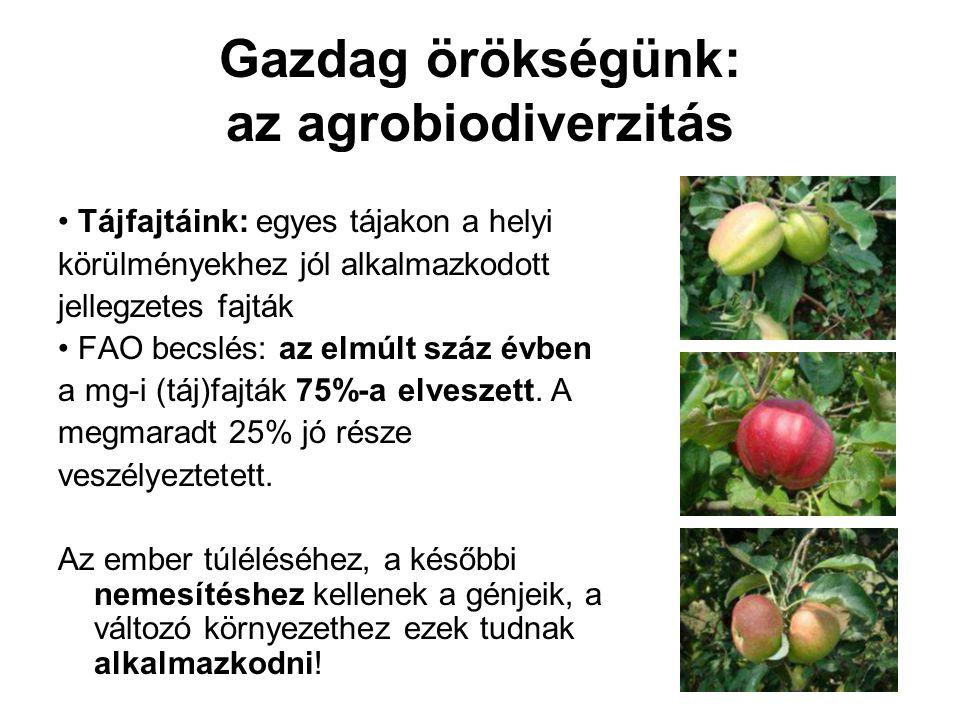 Gazdag örökségünk: az agrobiodiverzitás