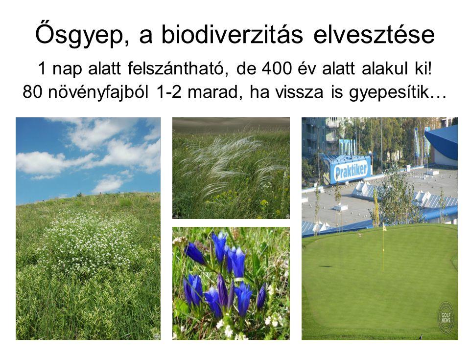Ősgyep, a biodiverzitás elvesztése 1 nap alatt felszántható, de 400 év alatt alakul ki.