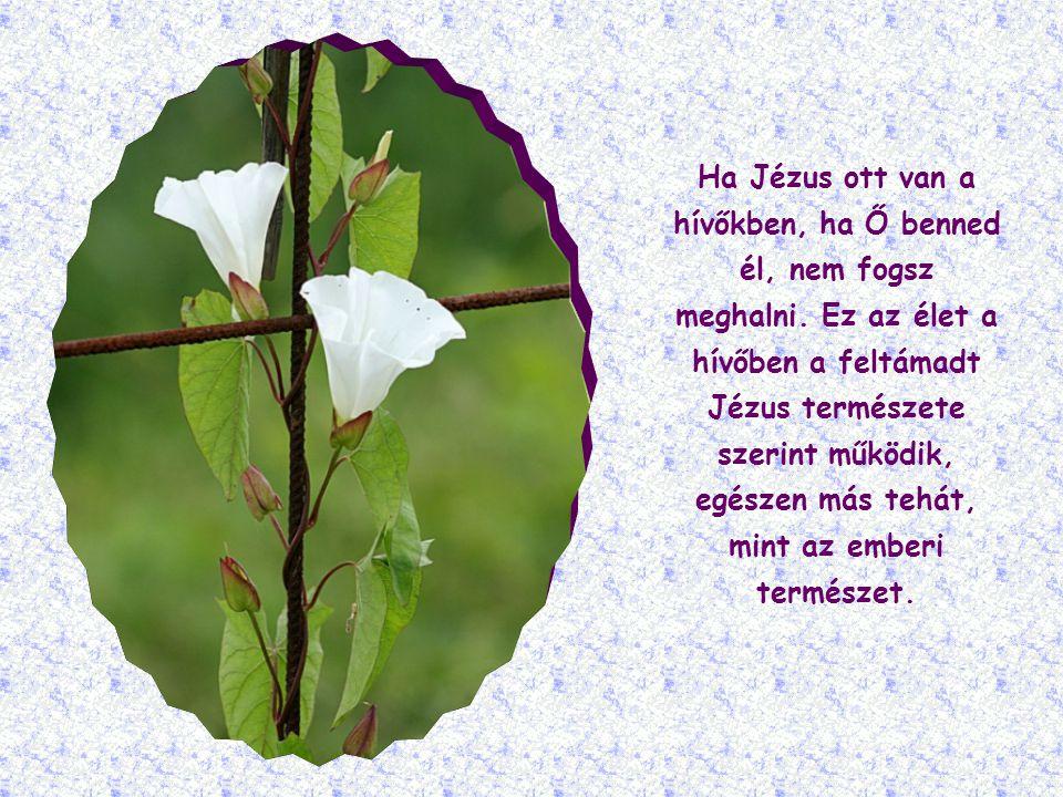 Ha Jézus ott van a hívőkben, ha Ő benned él, nem fogsz meghalni