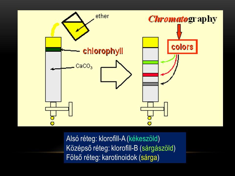 Alsó réteg: klorofill-A (kékeszöld)