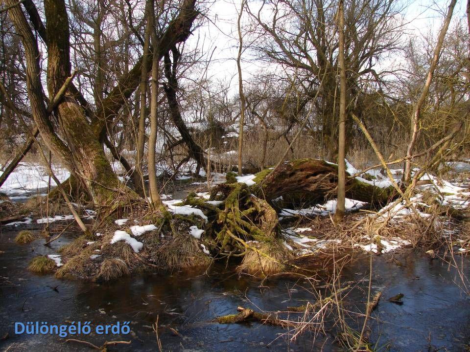 Dülöngélő erdő