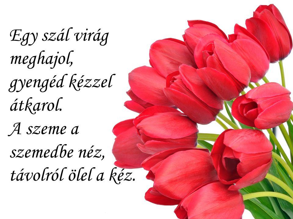 Egy szál virág meghajol, gyengéd kézzel átkarol