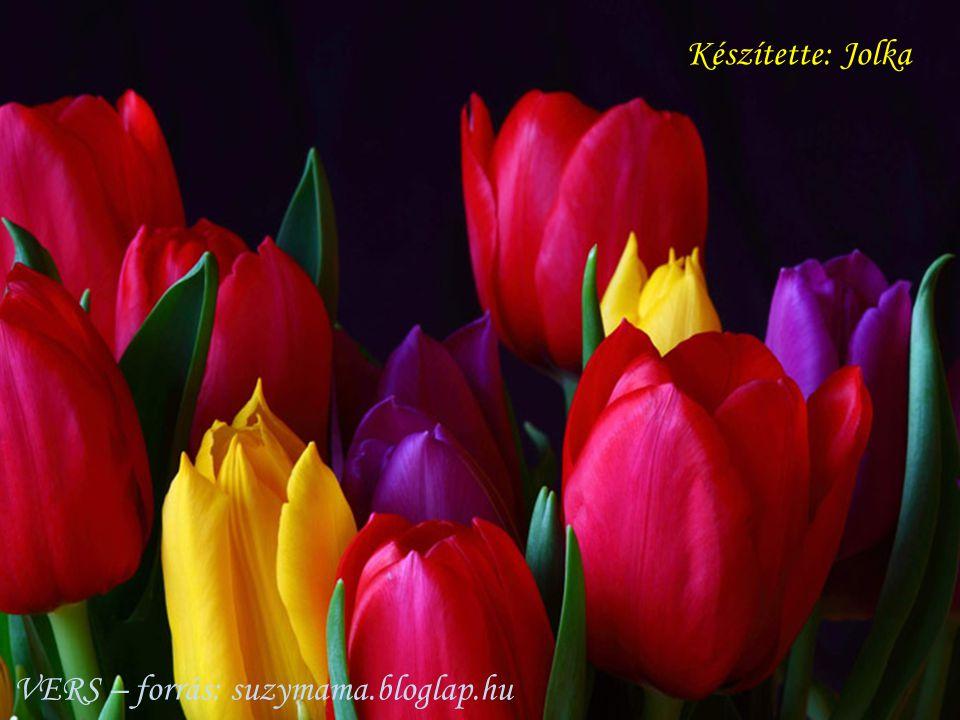 Készítette: Jolka VERS – forrás: suzymama.bloglap.hu
