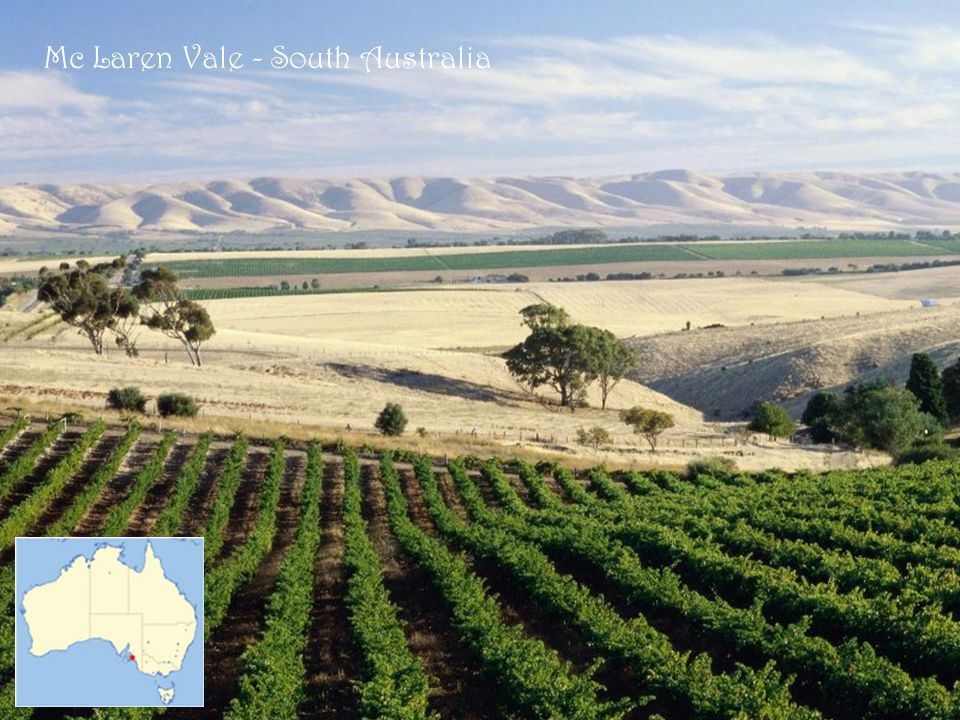 Mc Laren Vale - South Australia