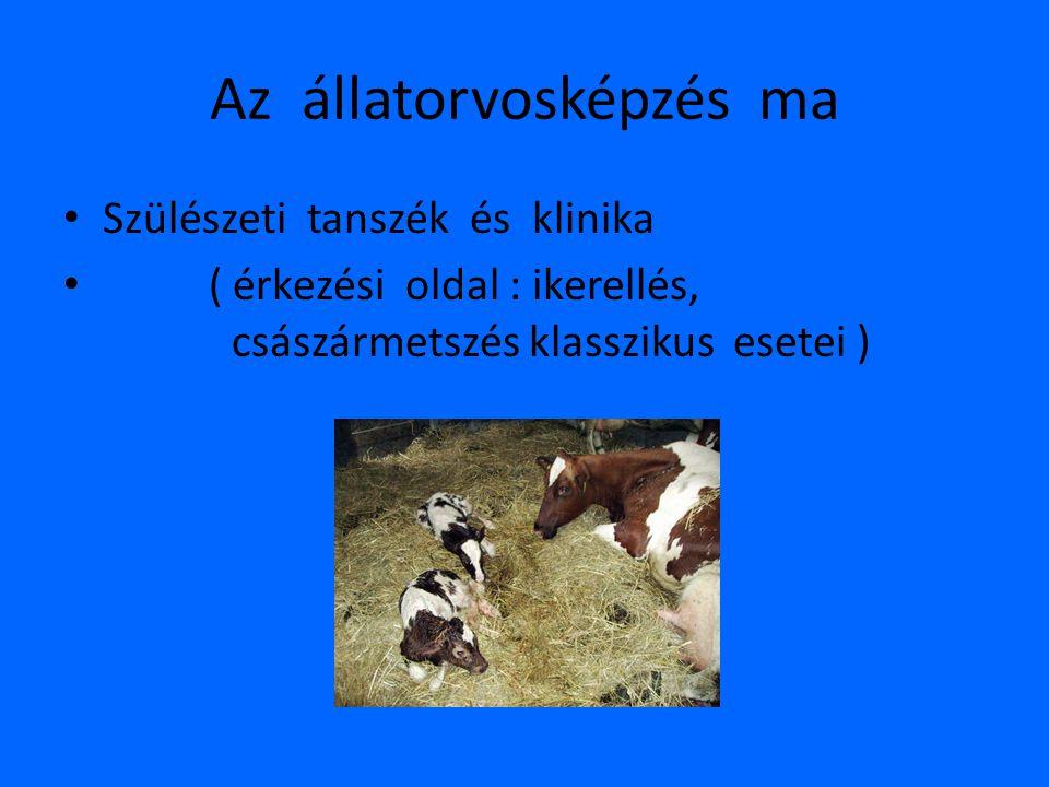 Az állatorvosképzés ma