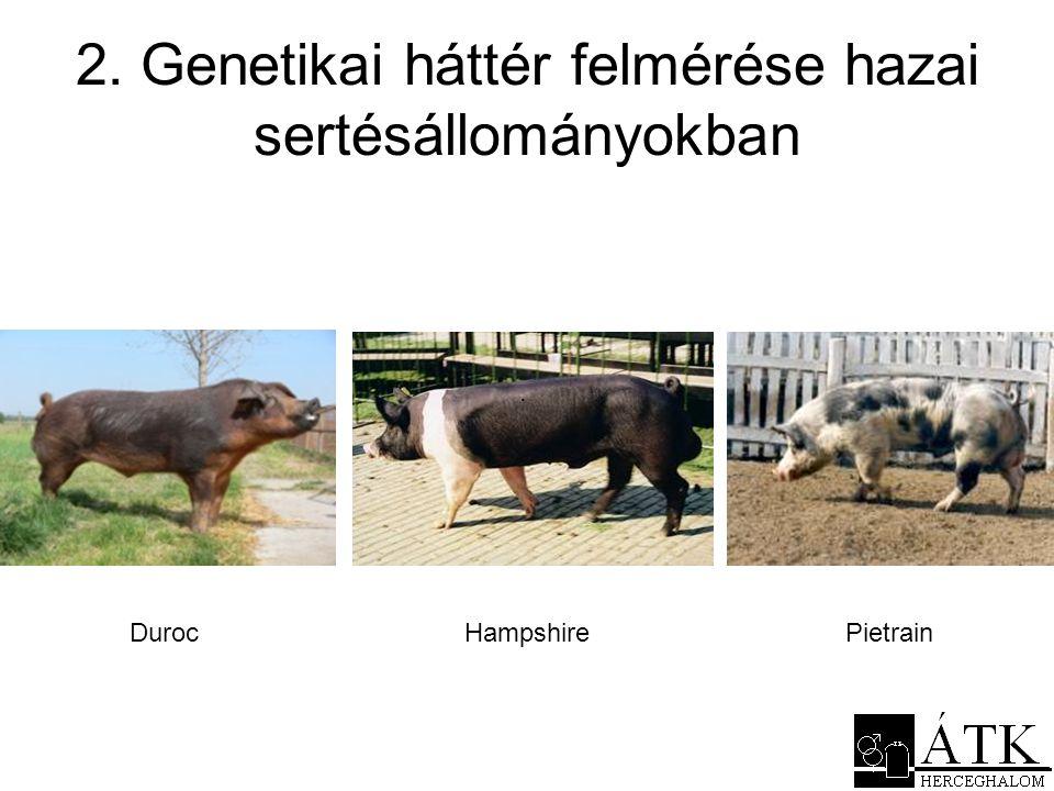 2. Genetikai háttér felmérése hazai sertésállományokban