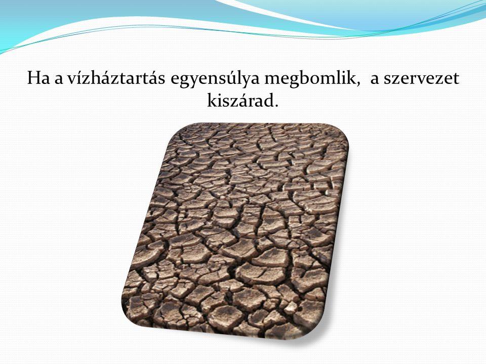 Ha a vízháztartás egyensúlya megbomlik, a szervezet kiszárad.