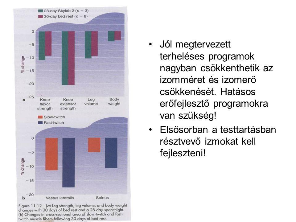 Jól megtervezett terheléses programok nagyban csökkenthetik az izomméret és izomerő csökkenését. Hatásos erőfejlesztő programokra van szükség!