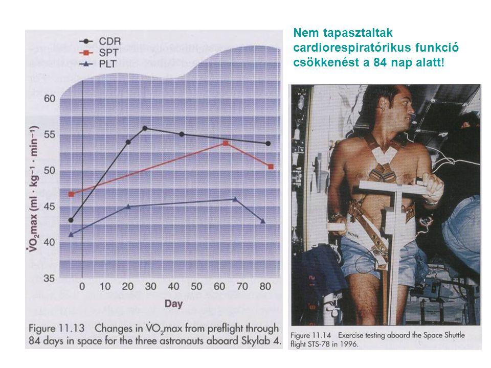 Nem tapasztaltak cardiorespiratórikus funkció csökkenést a 84 nap alatt!