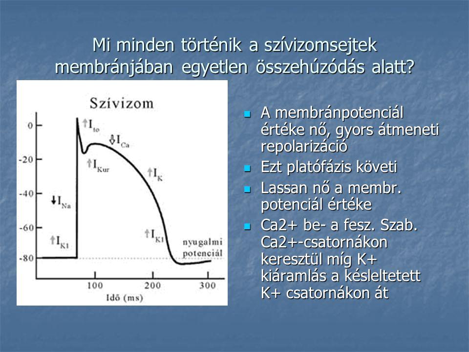 Mi minden történik a szívizomsejtek membránjában egyetlen összehúzódás alatt