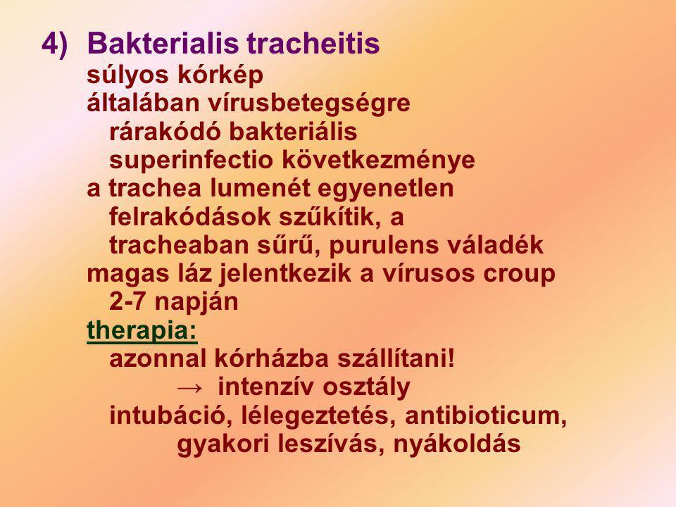 4). Bakterialis tracheitis súlyos kórkép általában vírusbetegségre