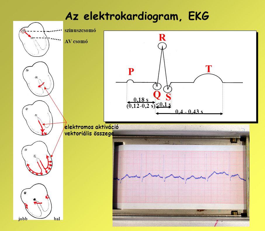 Az elektrokardiogram, EKG