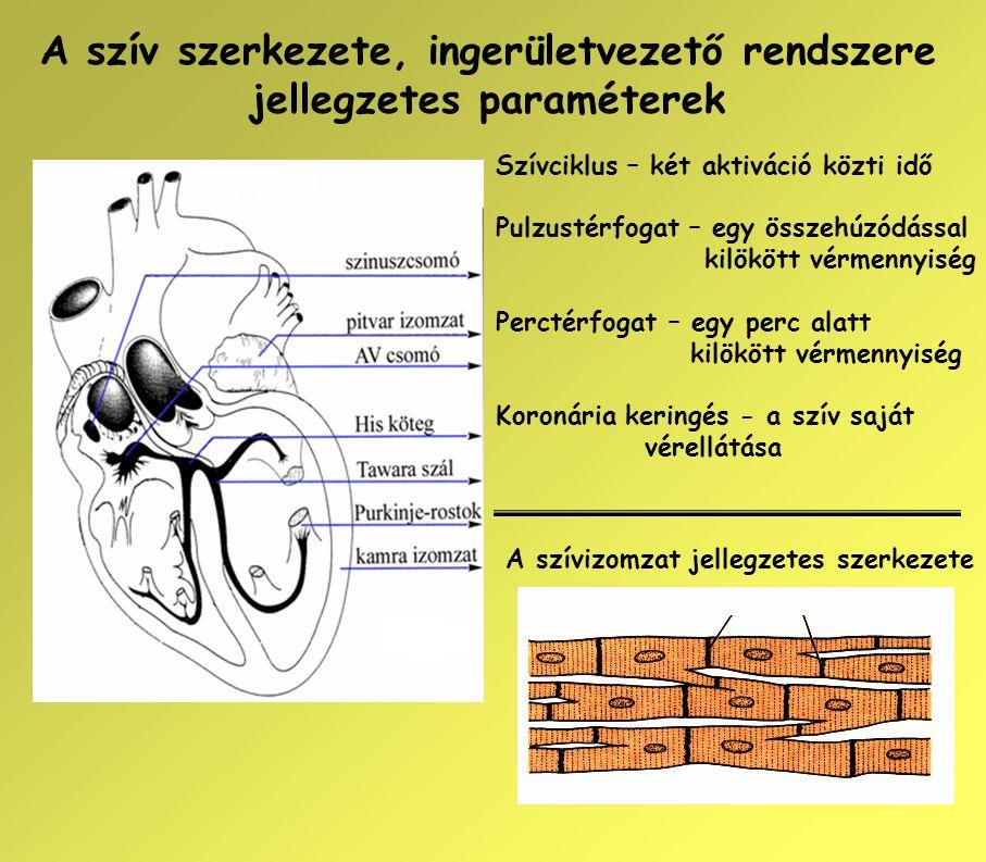 A szív szerkezete, ingerületvezető rendszere jellegzetes paraméterek