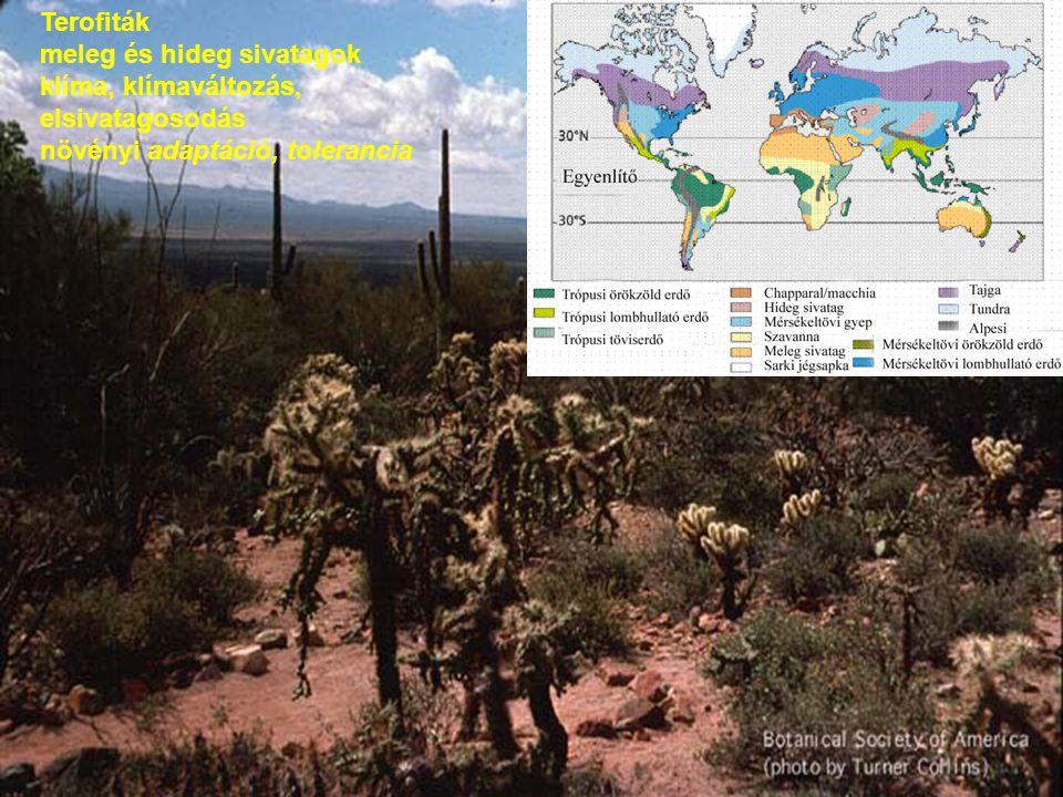 Terofiták meleg és hideg sivatagok. klíma, klímaváltozás, elsivatagosodás.