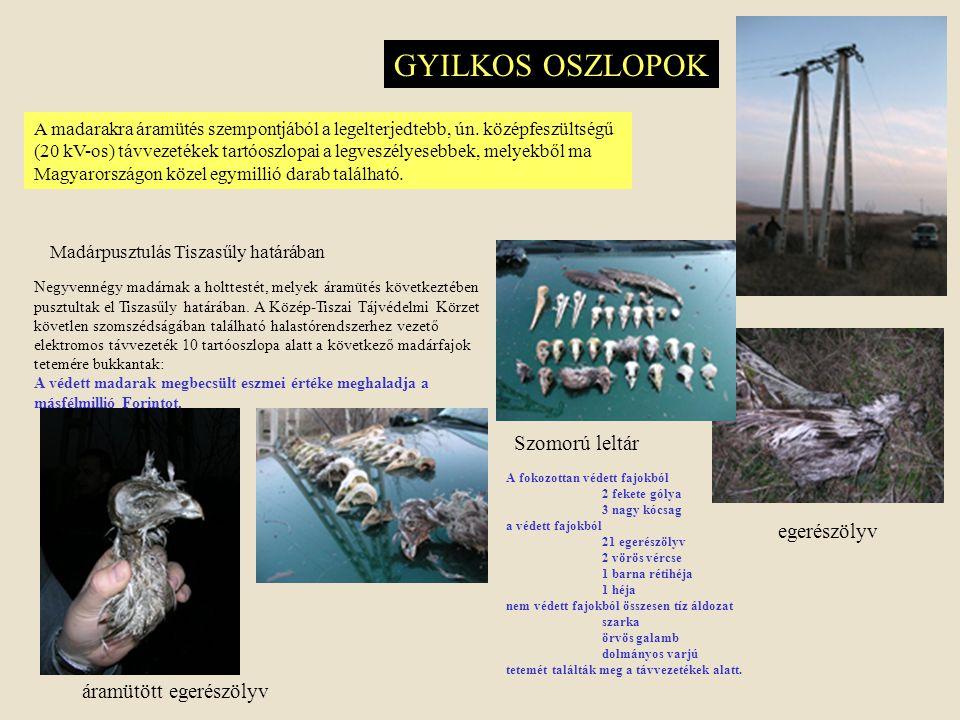 GYILKOS OSZLOPOK Szomorú leltár egerészölyv áramütött egerészölyv