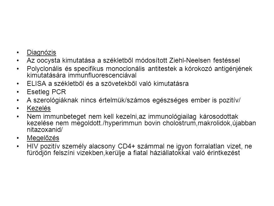Diagnózis Az oocysta kimutatása a székletből módosított Ziehl-Neelsen festéssel.