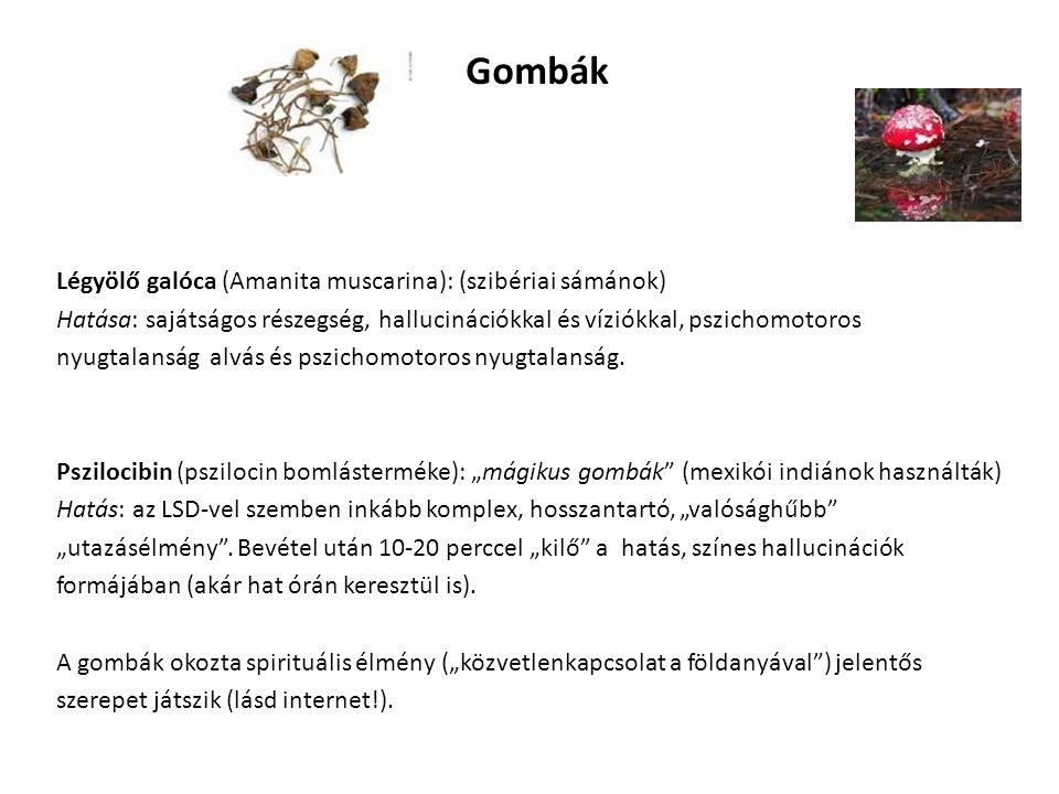 Gombák Légyölő galóca (Amanita muscarina): (szibériai sámánok)