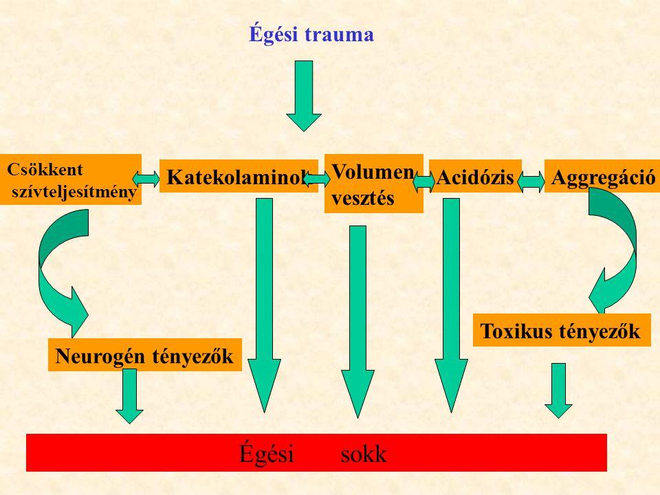 Égési sokk Égési trauma Volumen vesztés Katekolaminok Acidózis