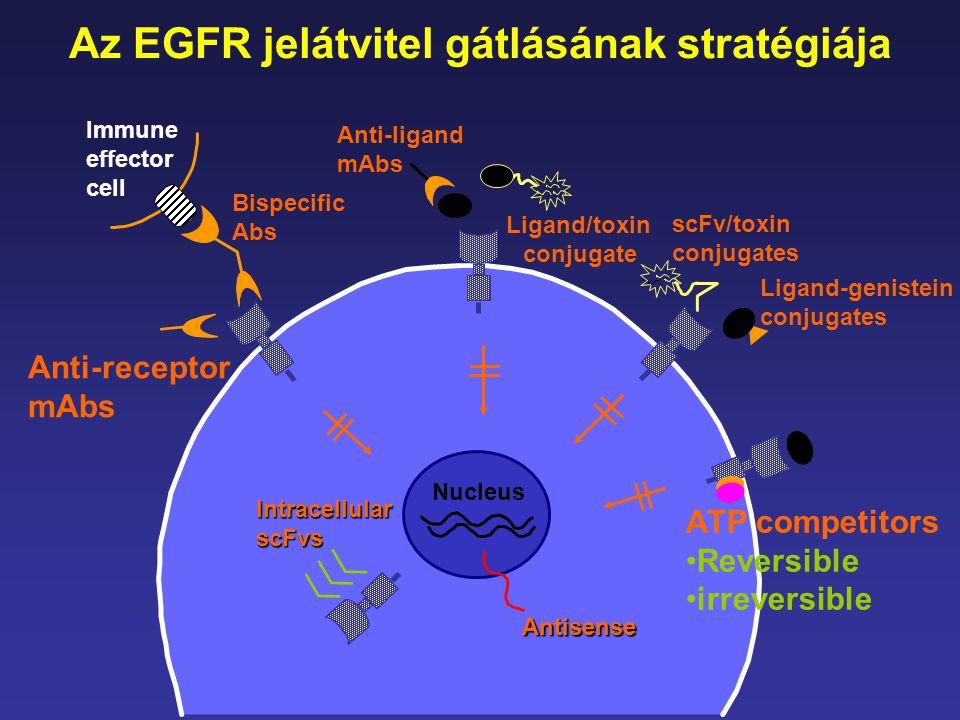 Az EGFR jelátvitel gátlásának stratégiája Ligand/toxin conjugate
