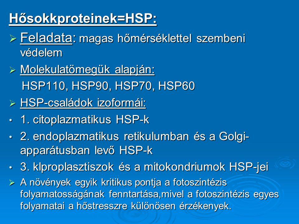 Hősokkproteinek=HSP: Feladata: magas hőmérséklettel szembeni védelem